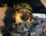 Dog with a Gun   Motivationals 18# by Picsis