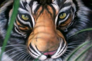 Bodypainting - Tiger