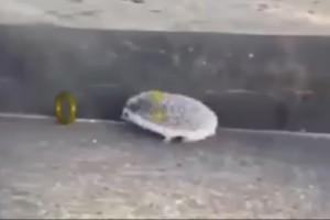 Sonic in Real Life