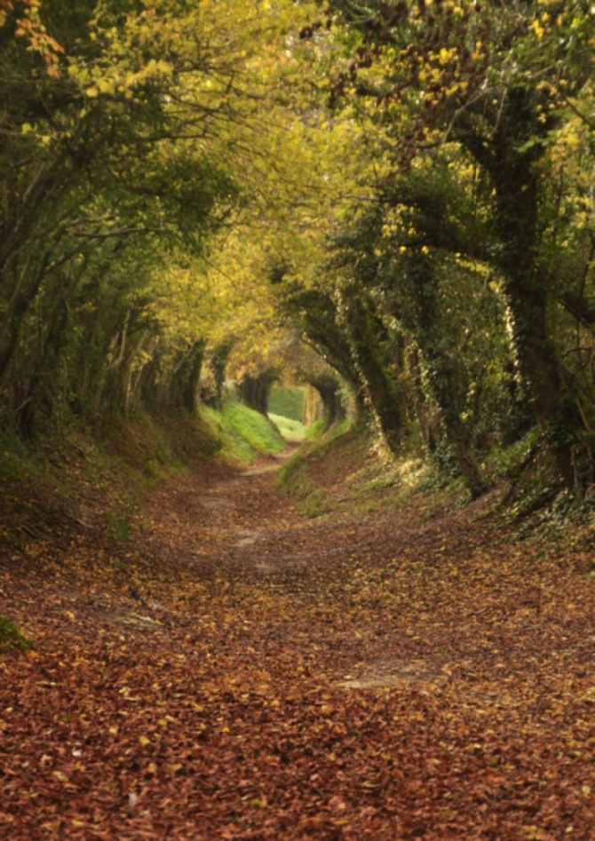 Beautiful Contagious Footpath to Halnaker Mill, West Sussex, England.